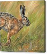 Hare Canvas Print