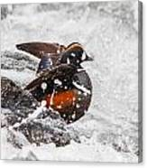 Harlequin In The Rapids Canvas Print