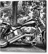 Harley D. Iron Horse Canvas Print