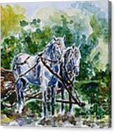 Harnessed Horses Canvas Print