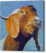 Harold Canvas Print