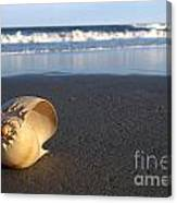 Harp Shell On Beach Canvas Print