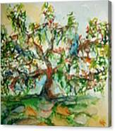 Harry Lauders Walking Stick  Canvas Print