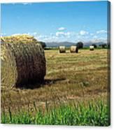 Harvest 3 Canvas Print