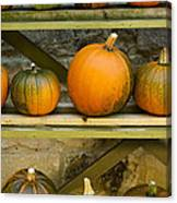 Harvest Display Canvas Print