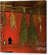 Harvest Of Herbs Canvas Print