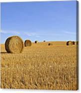Harvest Season Canvas Print