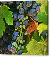 Harvest Time 2 Canvas Print