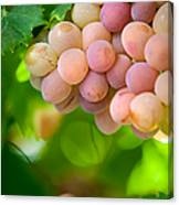 Harvest Time. Sunny Grapes Viii Canvas Print