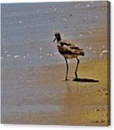 Hatteras Island Bird 8/24 Canvas Print