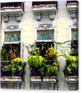 Havana Windows Canvas Print