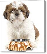 Havanese With Dog Bowl Canvas Print