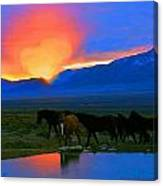 Have A Heart For Wild Horses  Canvas Print