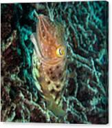 Havis Canvas Print