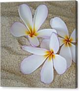 Hawaiian Tropical Plumeria Canvas Print