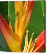 Hawaii Dreaming Canvas Print