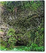 Hawaii Fern Grotto Canvas Print