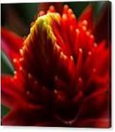 Hawaii Flower Macro Canvas Print