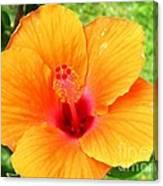 Hawaii Orange Hibiscus Canvas Print