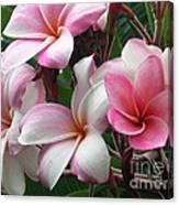 Hawaii Plumeria Canvas Print