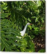 Hawaiian Garden Visitor - A Bright White Egret In The Lush Greenery Canvas Print