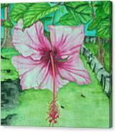 Hawaiian Healing Canvas Print