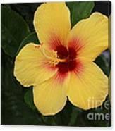 Hawaiian Hibiscus Canvas Print