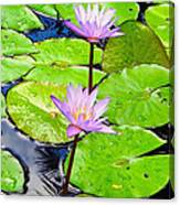Hawaiian Lily Pads And Flowers_01 Canvas Print