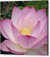 Hawaiian Lotus Canvas Print