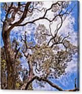 Hawaiian Sky Canvas Print