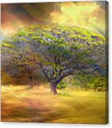 Hawaiian Tree Canvas Print