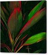 Hawaiiana 28 Canvas Print
