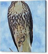 Hawk By Frank Lee Hawkins Canvas Print
