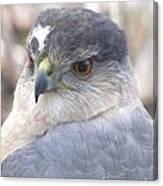 Hawk Eye 13528-3 Canvas Print