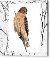 Hawk Framed In Branch Outline Canvas Print