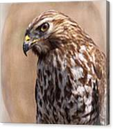 Hawk - Sphere - Bird Canvas Print