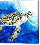 Hawksbill Sea Turtle 2 Canvas Print