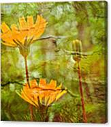 Hawkweed Wildflower Canvas Print