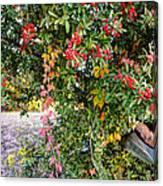 Hawthorn Berry Canvas Print