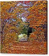 Hawthorn Hollow Canvas Print