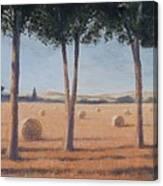 Hay Bales And Pines, Pienza, 2012 Acrylic On Canvas Canvas Print