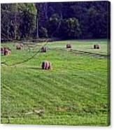 Hay Field Canvas Print