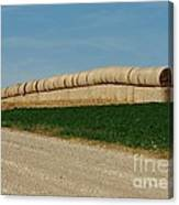 Hay Harvest Canvas Print