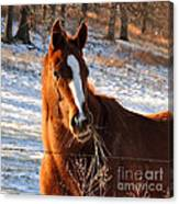 Hay There Canvas Print