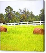 Hayrolls And Fences Canvas Print