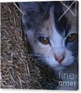 Haystack Cat Canvas Print