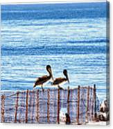 hd 383 hdr - Two Pelicans Canvas Print