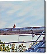 Hdr Bird On A Pipeline II Canvas Print