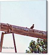 Hdr Dove On A Pipe Canvas Print