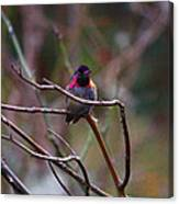 He Flashed Me With Fuchsia Canvas Print